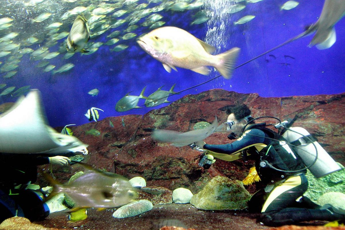 A Straits Times photographer testing underwater cameras at the Underwater World Singapore.