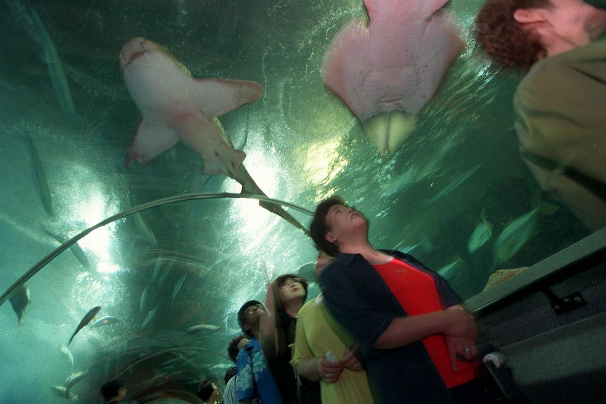 """The 83m long tunnel at Underwater World gives visitors the illusion of being """"underwater"""" as the fish swim around and overhead. The 6cm thick acrylic panels make the fish appear one-third smaller from outside."""