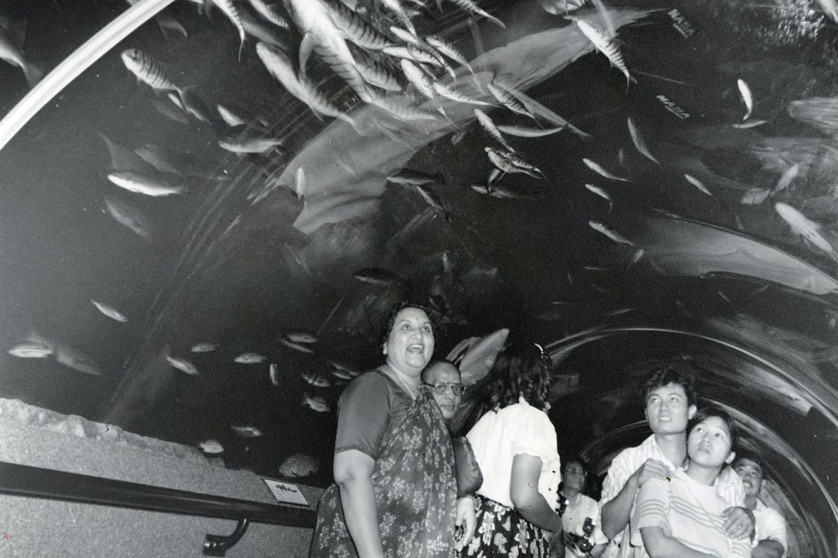 """The 83m long tunnel at Underwater World is the star exhibit. It gives visitors the illusion of being """"underwater"""" as the fish swim around and overhead."""