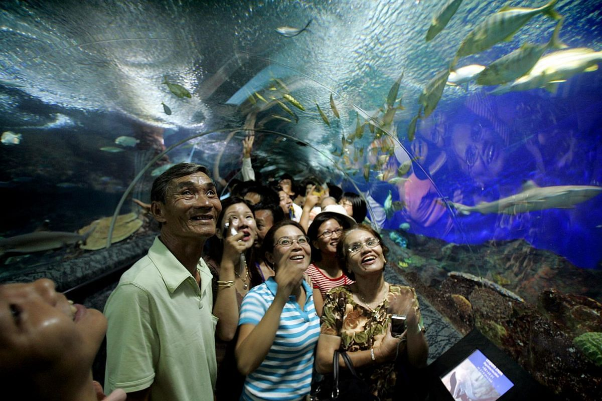 Tourists marvel at the rich diversity of marine creatures found at Underwater World Singapore.