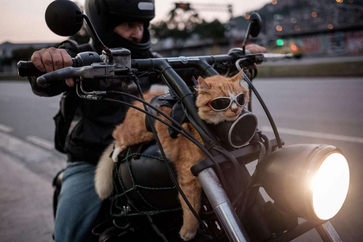 A biker rides his 12-year-old cat Chiquinho on his motorbike, in Rio de Janeiro, Brazil, on June 19, 2016.