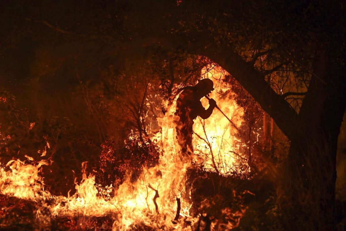 Firemen work to contain the 6,000 acre Border Fire in eastern San Diego County, California on June 21, 2016.
