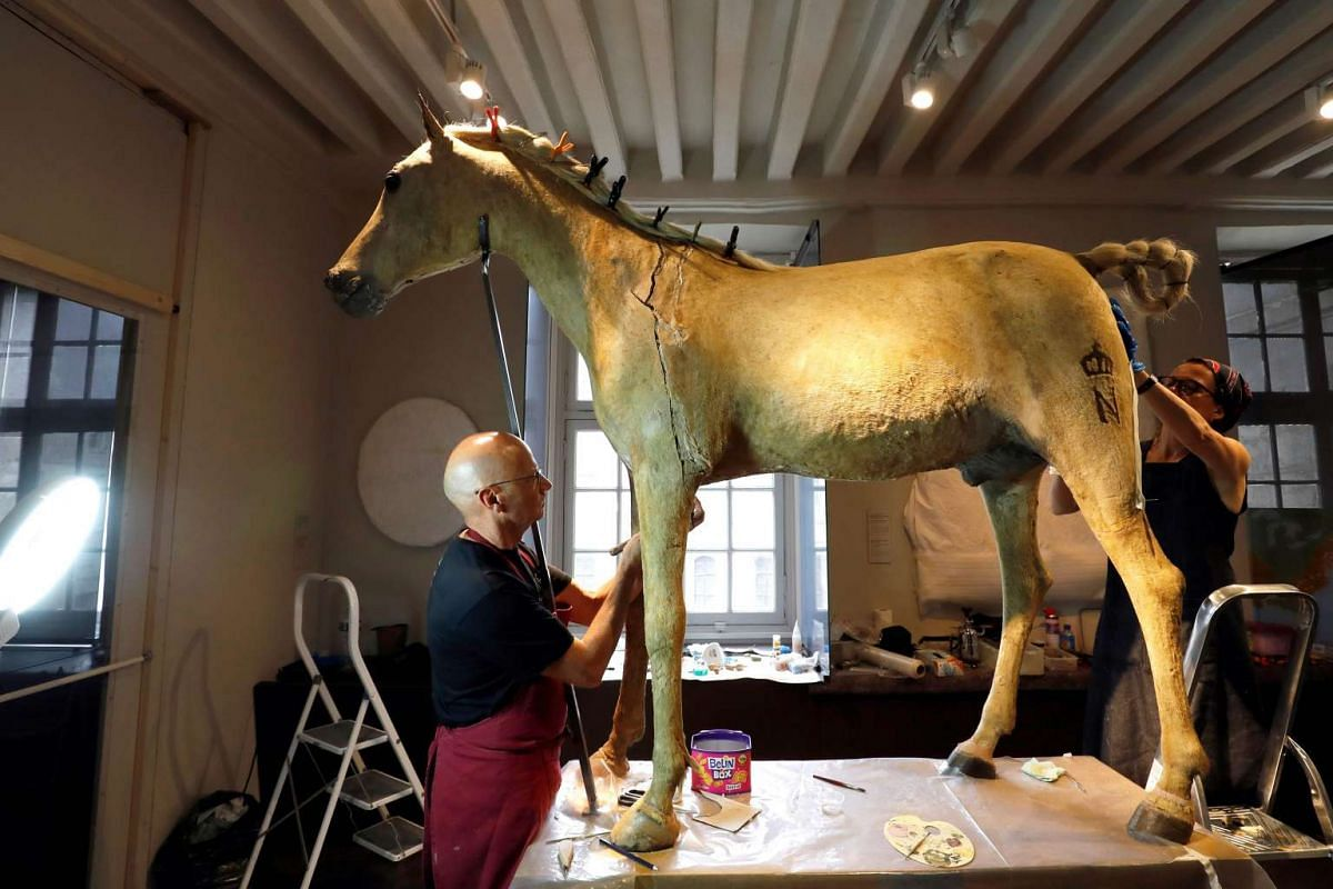 Two people restore Vizir, the last horse of Napoleon Bonaparte I, at the Museum of the Army - Musee de l' Armee - at the Hotel des Invalides in Paris, on June 27, 2016.