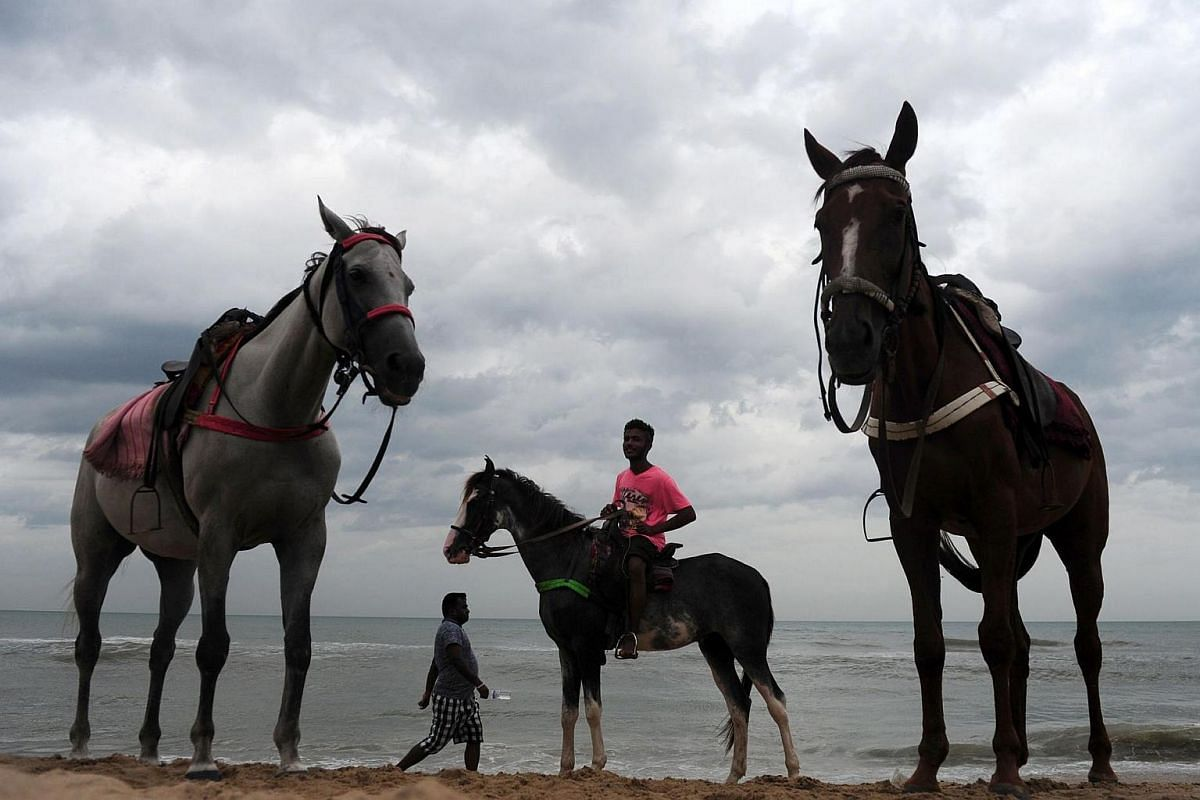 An Indian horseman waits for customers on a beach in Chennai on June 30.