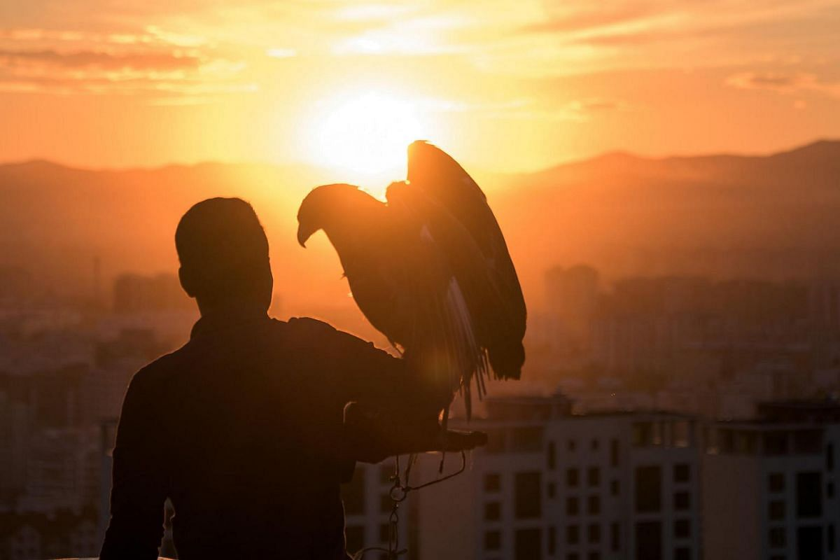 A Mongolian tourist poses with an eagle overlooking Ulan Bator on June 30.