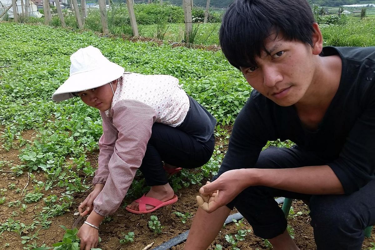 Above left: Farmers Zhang Yunjiao (left) and Bai Ninghave trouble planting fruits because of increasing soil pollution in Xiaodiantou village, Yunnan province. Above right: Residents in Shenmu county, Shaanxi province, say the pollution from an indus