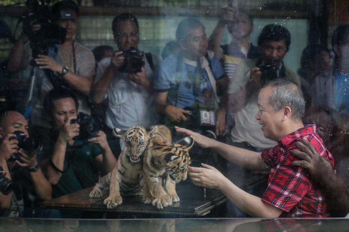 Malabon Zoo owner Manny Tangco (right) presents Bengal tiger cubs to the media at the Malabon Zoo in Malabon City, north of Manila, on July 14, 2016.