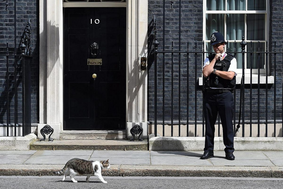Larry the cat, resident mouse-catcher of 10 Downing Street, takes a stroll.