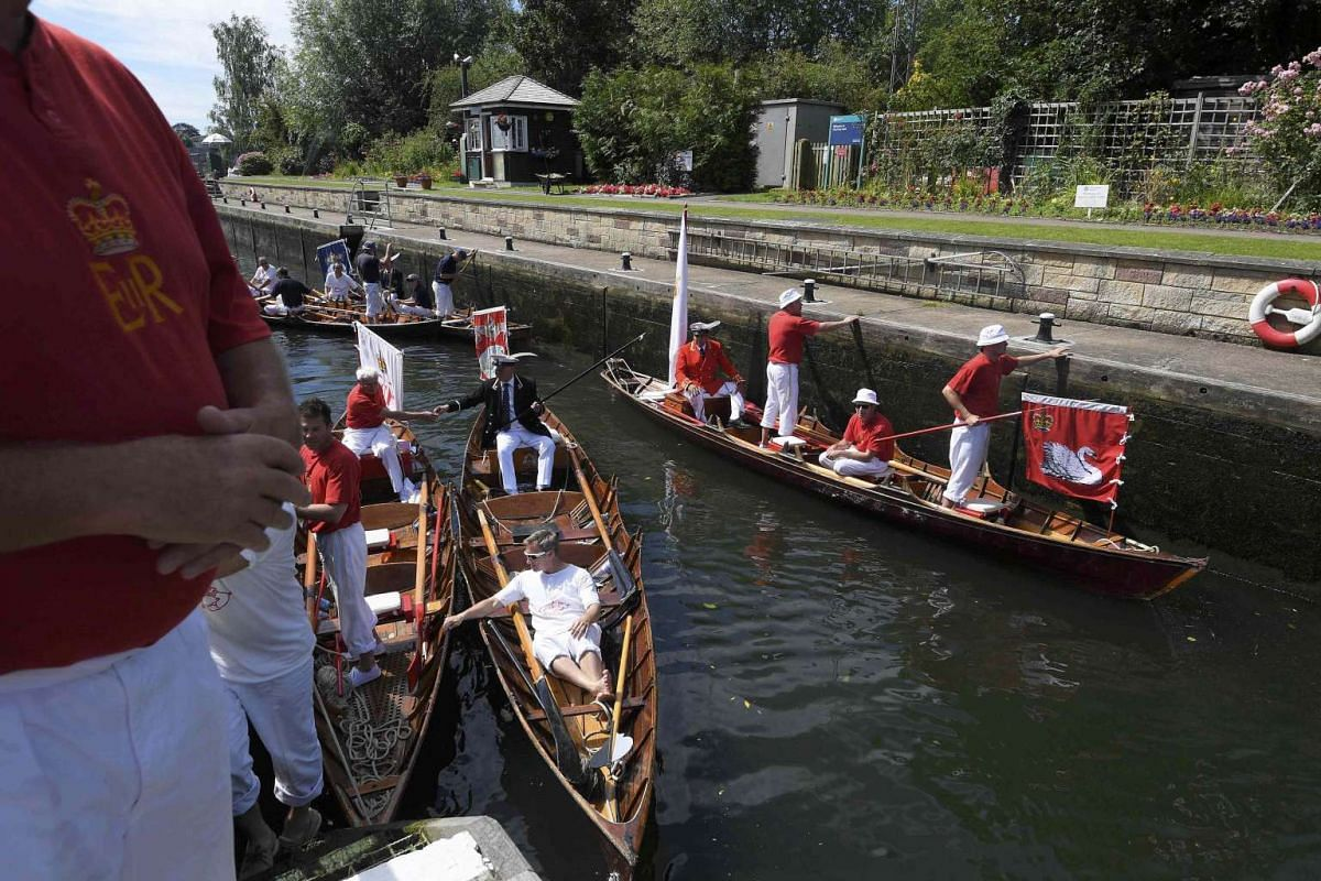 Boat crews pass through Chertsey lock during while counting and tagging mute swans, during Swan Upping along the River Thames, in Chertsey, southern England, on July 18, 2016.