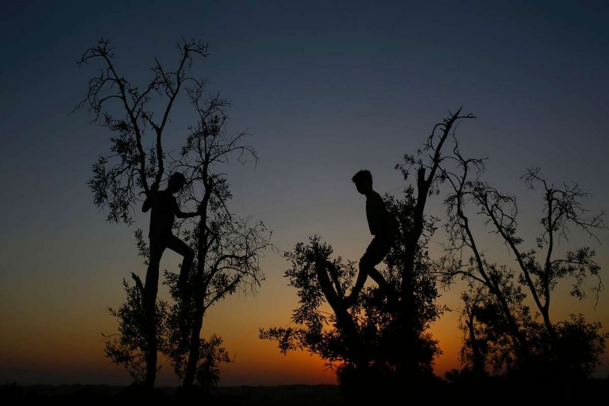 Palestinian youth play on a tree outside a weapon exhibition at a Hamas-run youth summer camp, in Gaza City, on July 21, 2016.
