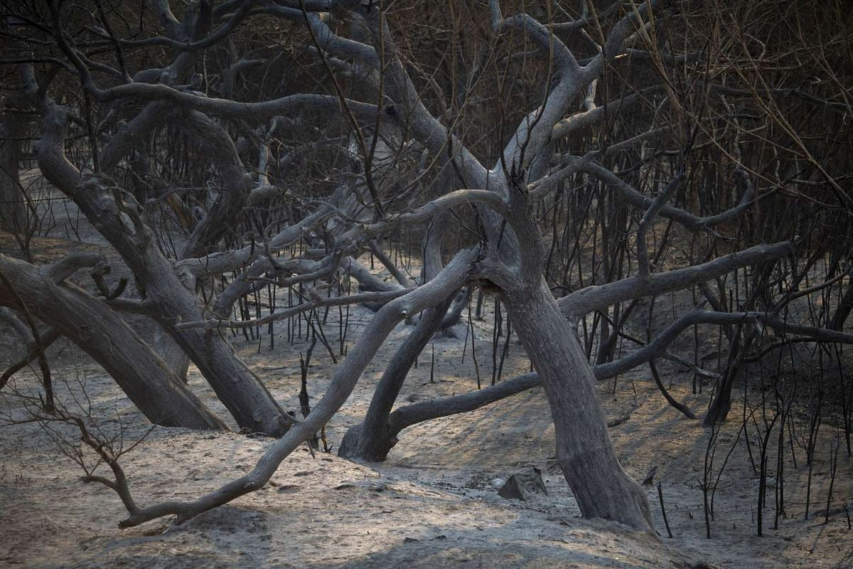 A charred forest is seen at the Sand Fire on July 25, 2016 in Santa Clarita, California.