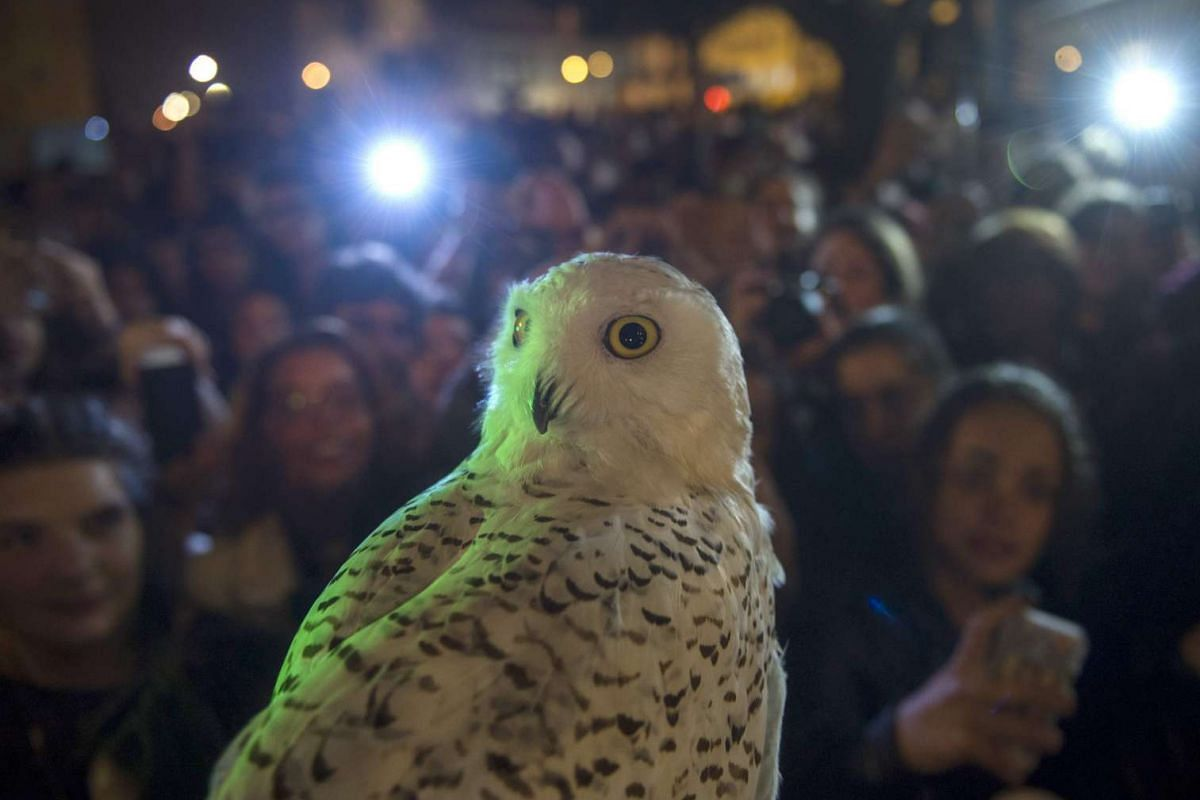 An owl is pictured next to people queueing up to purchase copies of British author J.K. Rowling's latest book in the Potter series, Harry Potter and the Cursed Child, on July 31 at Lello, a Gothic Revival style bookstore in Porto, Northern Portugal