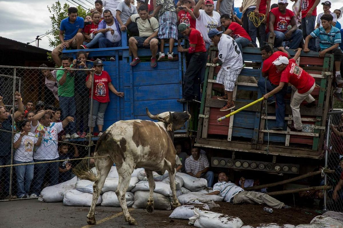 A bull is seen on the loose as Nicaraguans participate in a traditional parade in honor of Santo Domingo de Guzman, in Managua, Nicaragua, July 31.