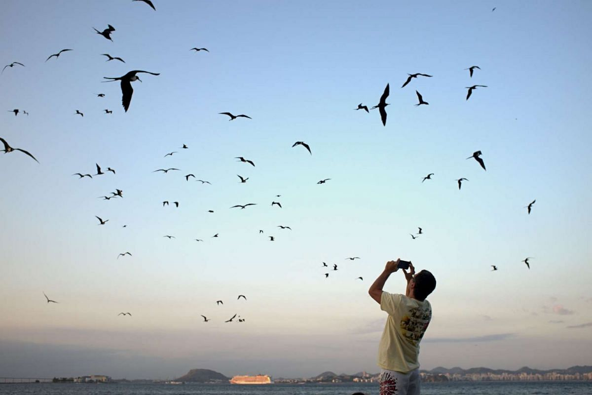 A man takes photos of frigatebirds on the Flamengo beach in Rio de Janeiro, Brazil on the eve of the opening of the Rio 2016 Olympic Games.