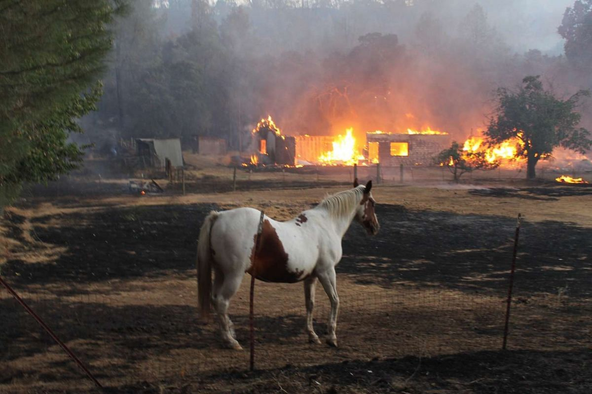 A horse wandering near a burning area at the Clayton Fire-affected Lower Lake, in Lake County, on Aug 14, 2016.