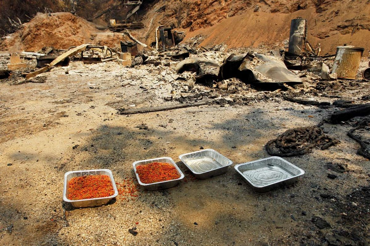 Food and water intended for animals are left at the site of a destroyed home after the Soberanes Fire burned through the Palo Colorado area, California, on July 31, 2016.