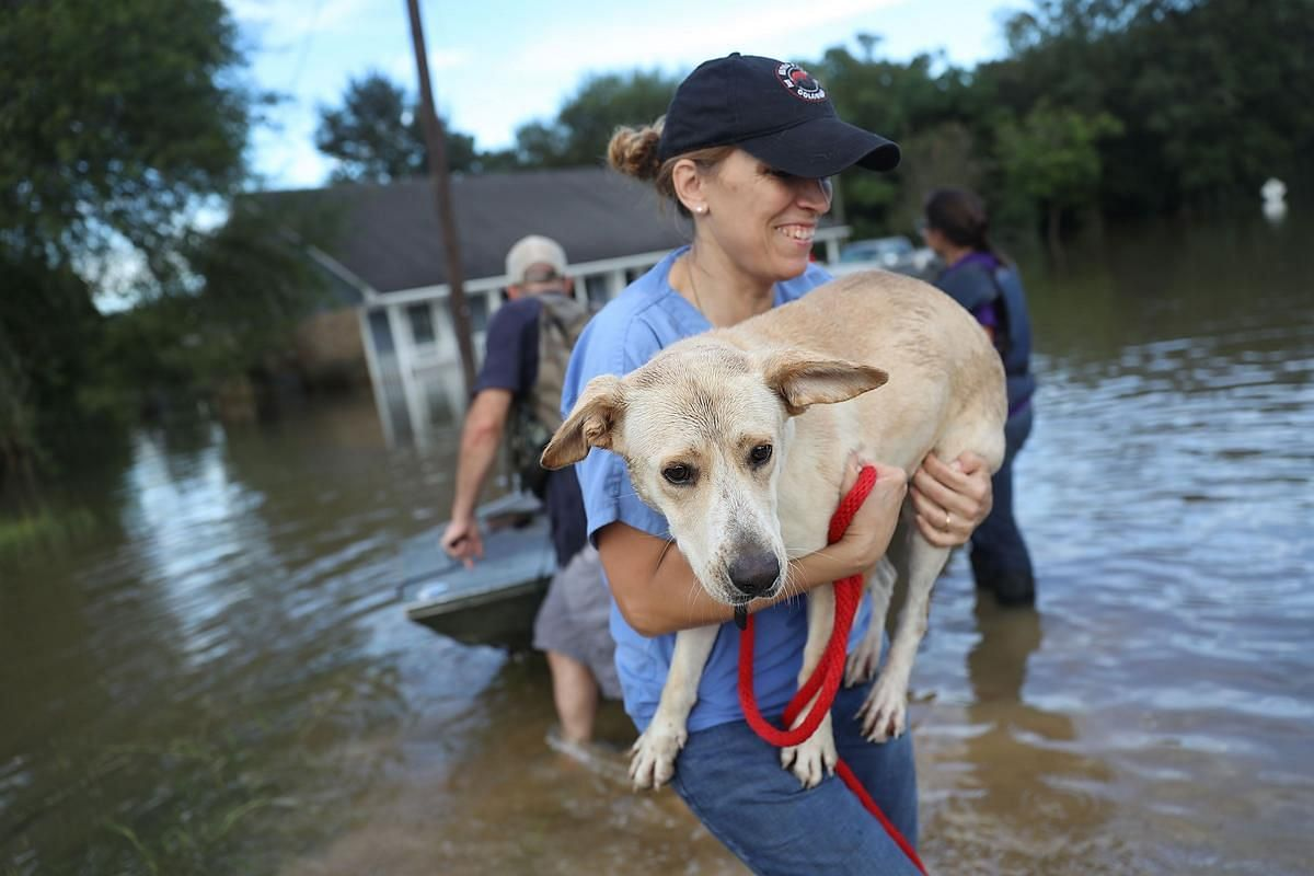 Ann Chapman from the Louisiana State Animal Response Team carries a dog she helped rescue from flood waters on August 15 in Baton Rouge, Louisiana.