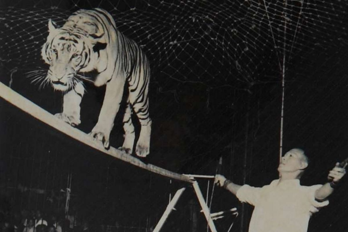 Two of the acts at the Tai Thean Kew circus – the tiger beam (above) and the tightwire unicycle that author Adele Wong's grandmother Sze Ling Fen performed.