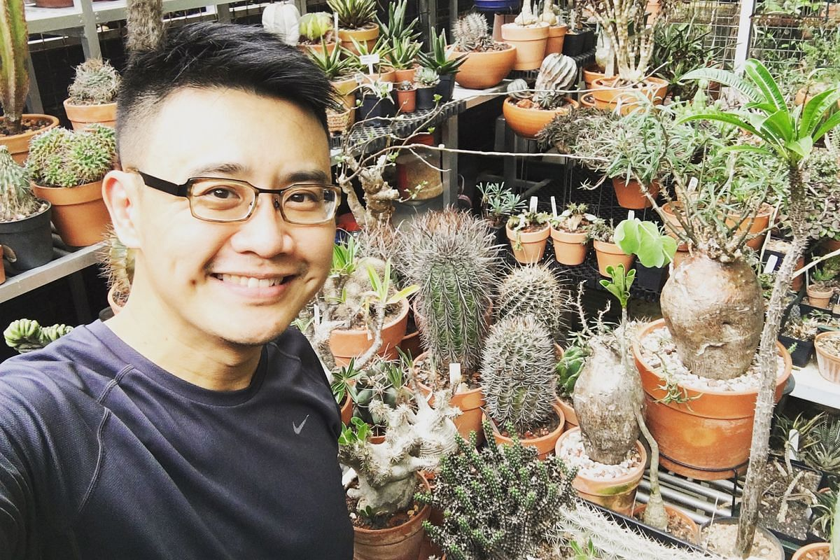 Lawyer Russel Low tries to take shorter holidays so that he is not away from his plants too long.