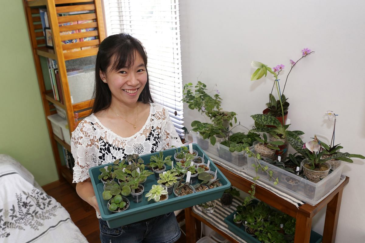 Ms Isabelle Lee (above), who volunteers with the Nature Society (Singapore), has a soft spot for African violets and slipper orchids.