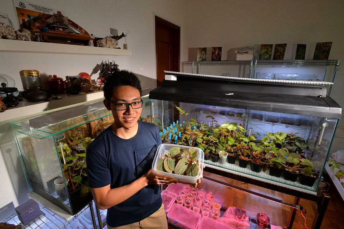 National serviceman Siaw Yu Zhang started cultivating begonias last year.