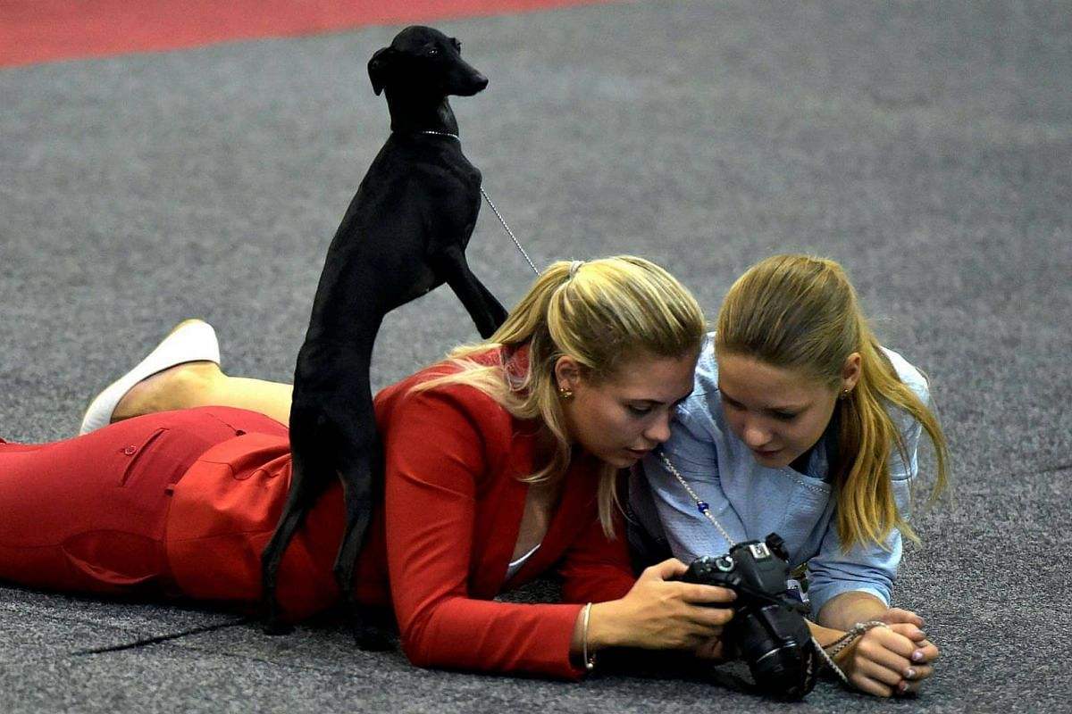 A dog sits on its handler as she looks at her camera during a dog show in Brussels, Belgium, on Aug 28, 2016.