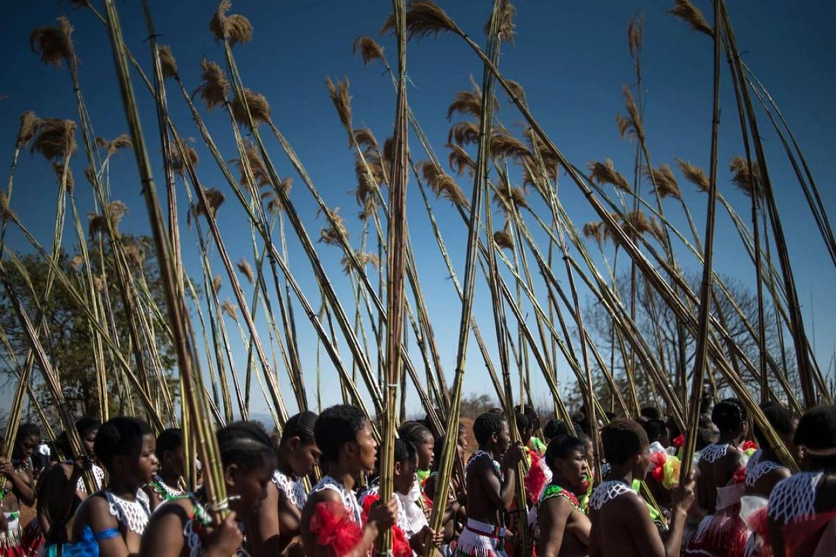 Maidens carry and lay reeds while they sing and dance during the annual royal Reed Dance at the Ludzidzini Royal palace on Aug 28 in Lobamba, Swaziland.