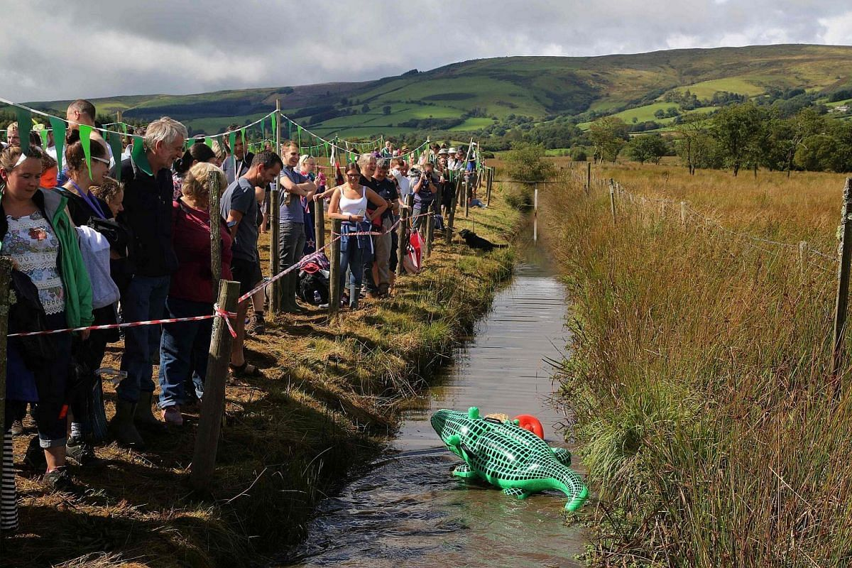 A man dressed as a lifeguard with a crocodile strapped to his back swims the course during the World Bog Snorkelling Championships in Waen Rhydd peat bog at Llanwrtyd Wells, south Wales, on Aug 28.