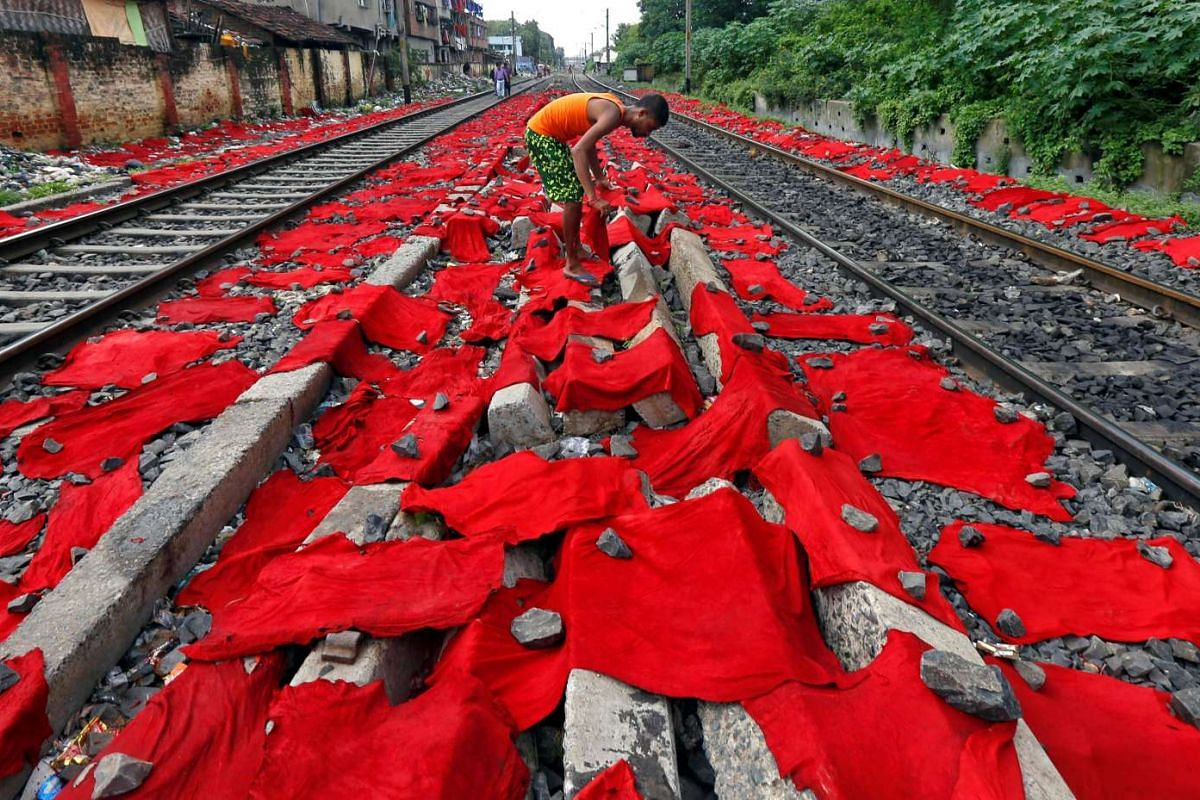 A man lays dyed cattle skins between railway tracks for drying in Kolkata, India on Sept 1, 2016.