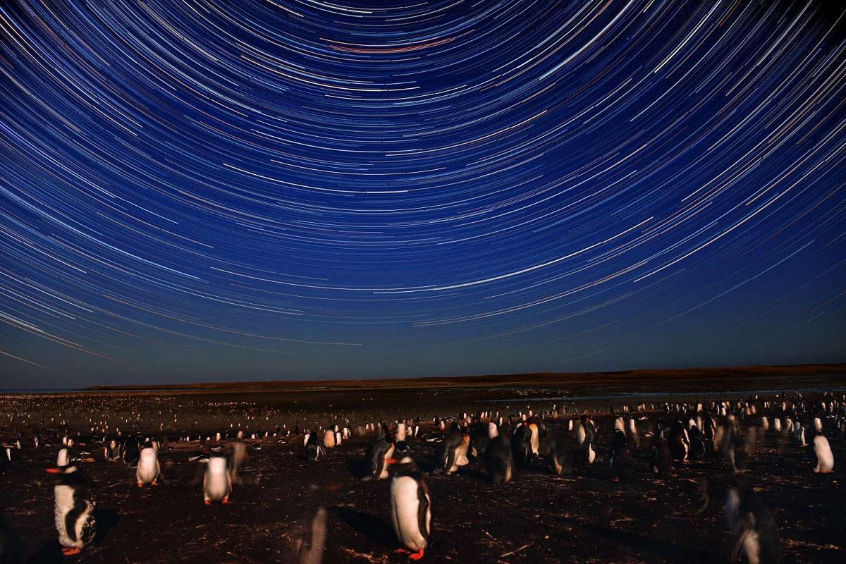 A composite of 216 images shows the trail of stars over colonies of Gentoo and King penguins on Feb 19, 2016 in Bluff Cove, Falkland Islands.
