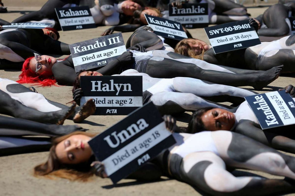 People for the Ethical Treatment of Animals (PETA) activists hold a demonstration, with 38 activists painted as killer whales to represent what they say are the number of orcas that died prematurely at Sea World, in San Diego, California, US, on Sept