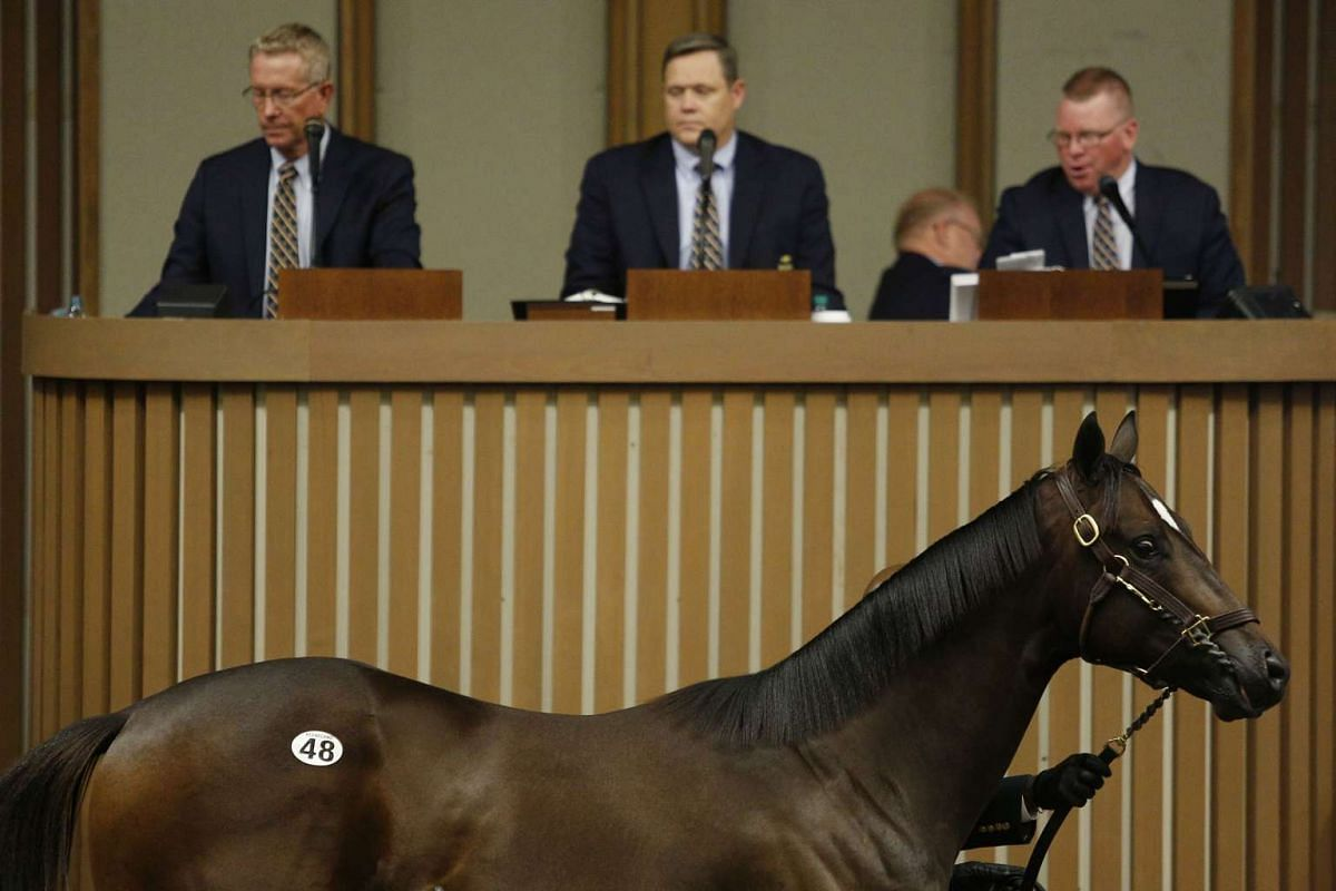 A yearling thoroughbred racehorse is displayed at an auction during the 2016 September Yearling Sale at Keeneland Racecourse in Lexington, Kentucky, US, on Sept 12, 2016.