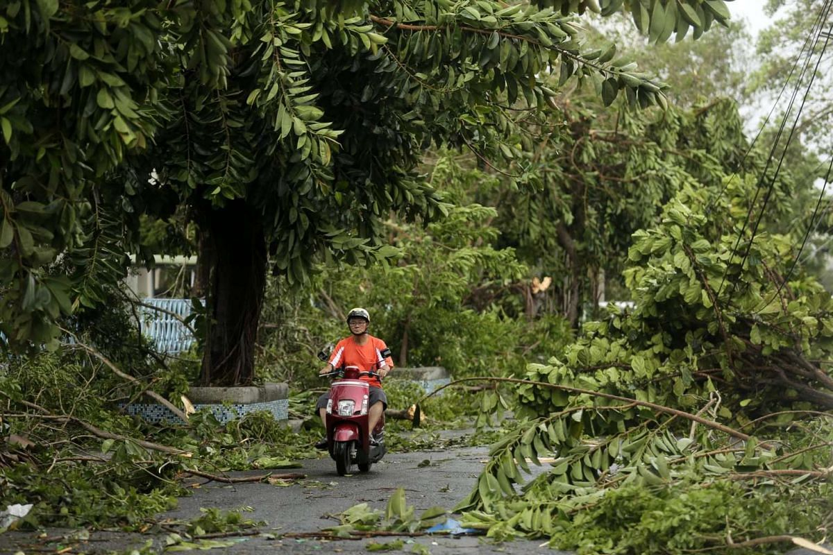 A motorist drives past fallen tree branches caused by Typhoon Meranti in Kaohsiung city, southern Taiwan, on Sept 15, 2016.
