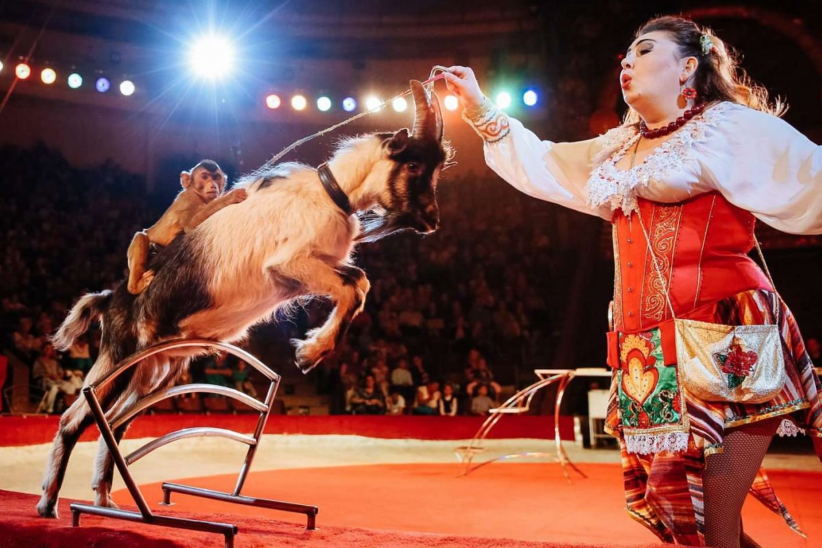 An artist performs with a goat and monkey during the presentation of the new international show The Extreme Arena at the National Circus in Kiev, Ukraine on Sept 15, 2016.