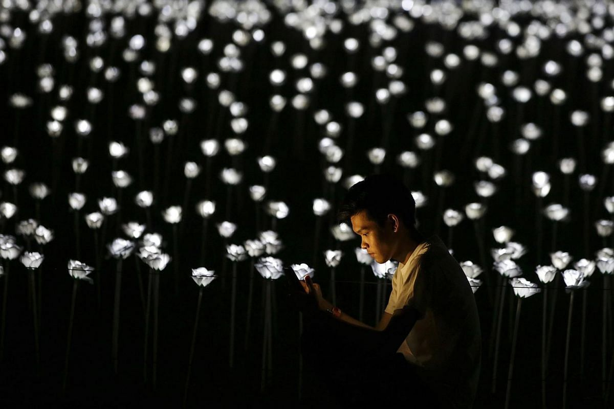 A man look at his smartphone against the 30 thousand Light Emitting Diode (LED) white roses during The Nightscape of Light Sensation – Love Series event at Serdang, outside Kuala Lumpur, Malaysia on Sept 19, 2016.