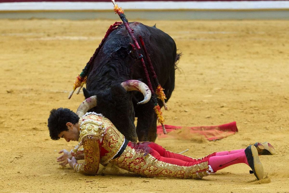 Spanish bullfighter Lopez Simon is gored by his first bull during the 4th bullfight of San Mateos Fair in Logrono, La Rioja, Spain on Sept 20, 2016.