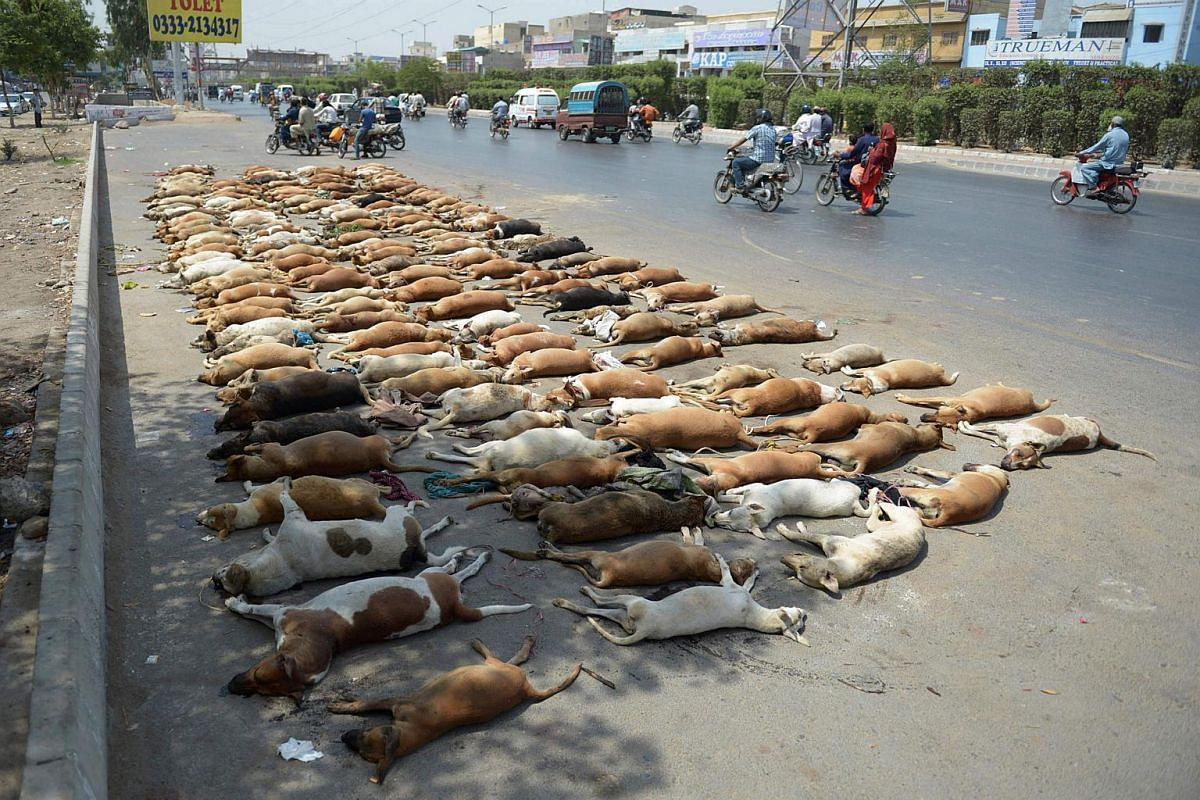 In this photograph taken on May 12, 2016, Pakistani commuters drive past a pile of stray dog carcasses on a road in Karachi.