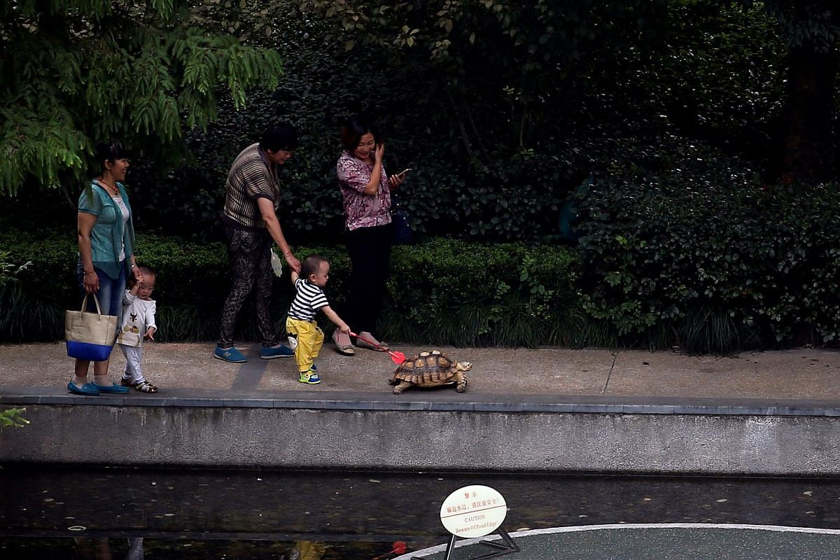 Residents look at a tortoise while it is being walked by its owner (not pictured) in an upscale district in Shanghai, China on Sept 23, 2016.