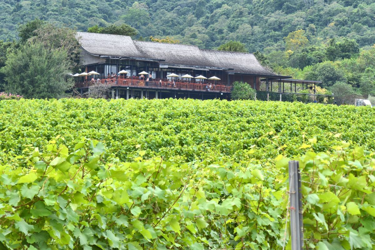 Enjoy beautiful views from the bar and bistro overlooking Hua Hin Hills Vineyard.