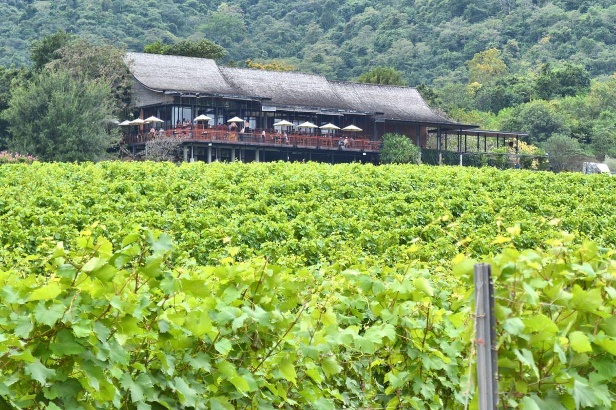 Enjoy beautiful views from the bar and bistro overlooking Hua Hin Hills Vineyard.