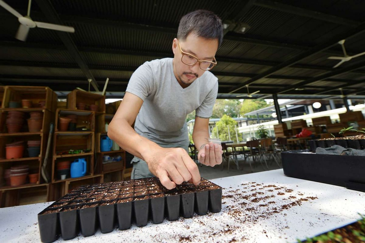 Mr Bjorn Low grows vegetables and herbs for restaurants to use in their dishes.