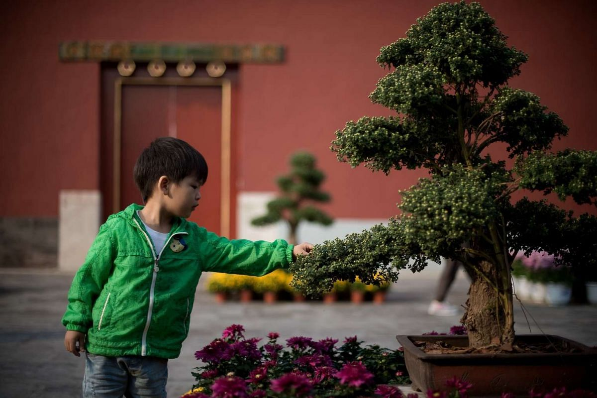 A boy touches the leaves of a plant inside the Forbidden City during China's Golden Week holiday in Beijing, on Sept 29, 2016.