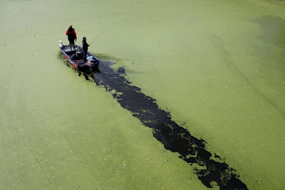 Fishermen stand on a boat on the Sevre Nantaise River that is covered by duckweed in Vertou, France, October 4, 2016. PHOTO: REUTERS