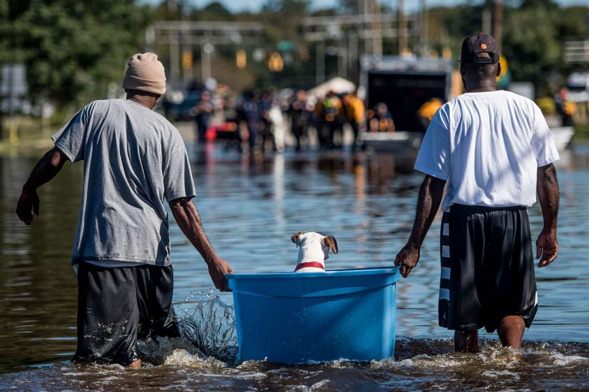 Two men rescue a dog from floodwaters on Oct 12, 2016 in Lumberton, North Carolina.