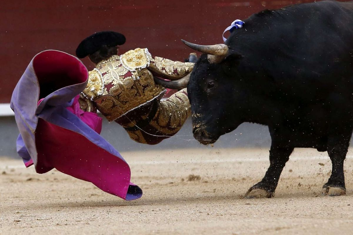 Spanish bullfighter Fernando Robleno is gored by his first bull during the National Day bullfight at the bullring of Las Ventas in Madrid, Spain, on Oct 16, 2016.