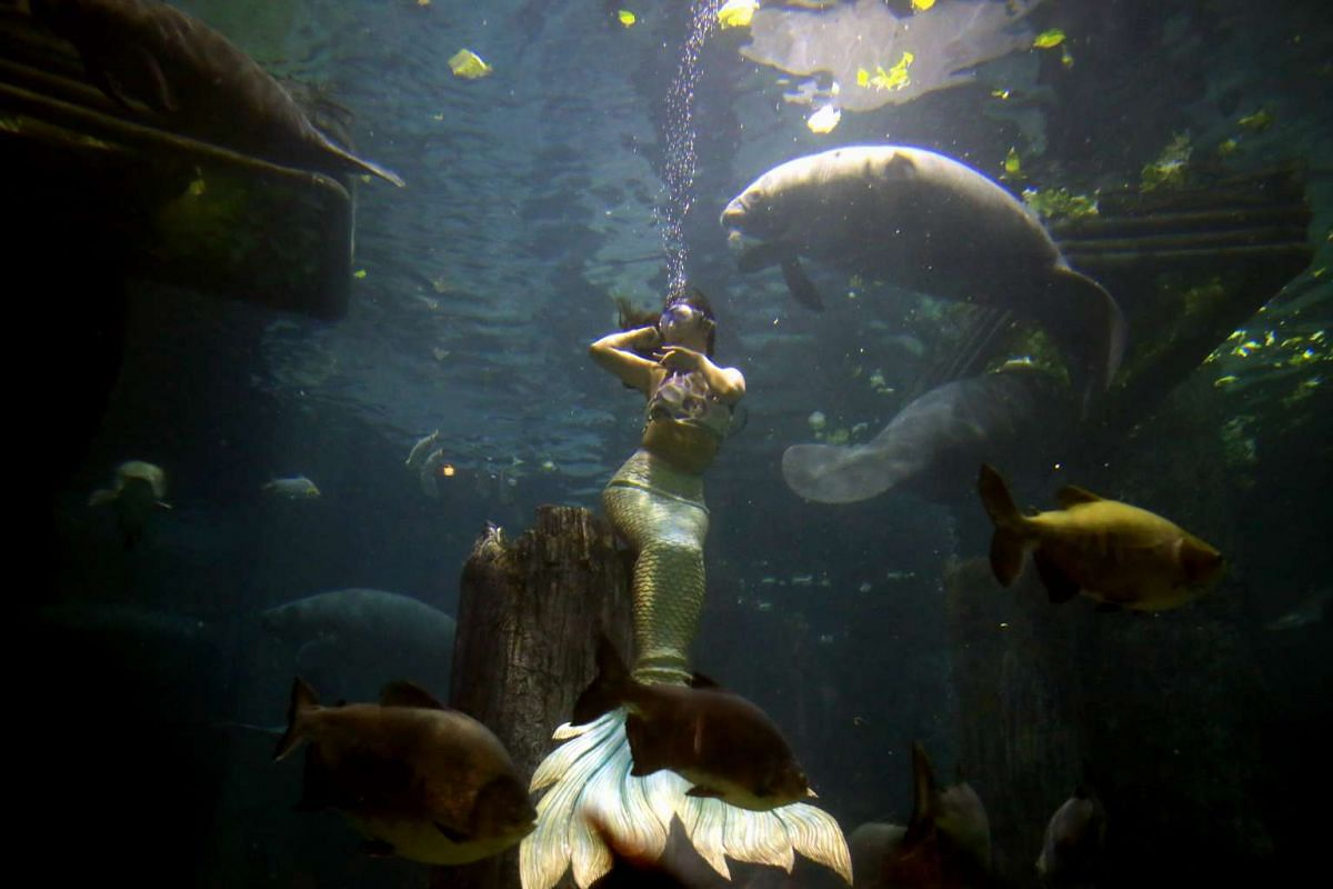 Have a splashing time watching mermaids dance with manatees at the Amazon Flooded Forest in River Safari.