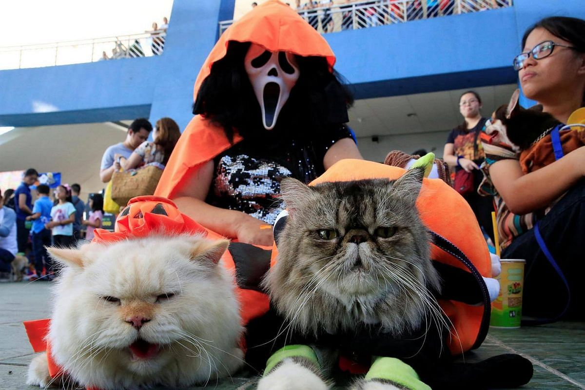 A pet owner wears a Halloween mask with her Persian cats as they take part in a 'A Petrifiying Trail Pet' costume party at a mall in Pasay city, Metro Manila, Philippines, on Oct 23, 2016.