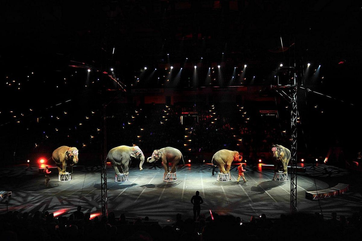 Elephants with the Ringling Bros. and Barnum & Bailey Circus perform in Baltimore.