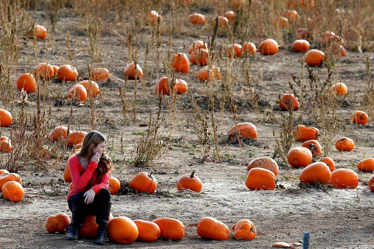 A woman takes a break from hunting for a pumpkin for the upcoming Halloween holiday at the pick your own Rock Creek Farm in Broomfield, Colorado, on Oct 27, 2016.