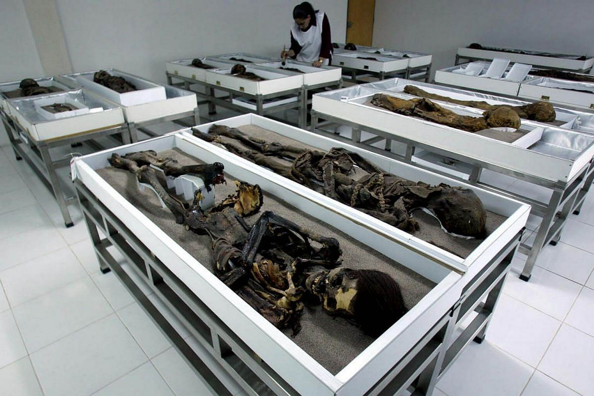 Chinchorro mummies are seen inside Azapa's San Miguel Museum in Arica city, north Santiago, in this file picture taken on Oct 27, 2005.